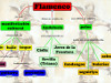Mapa conceptual del Flamenco